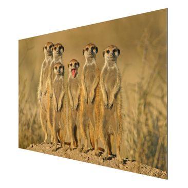 Product picture Aluminium Print - Mural Meerkat Family -...