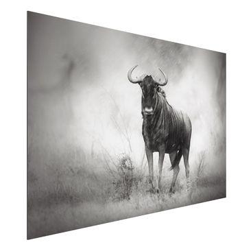 Immagine del prodotto Stampa su alluminio - Staring Wildebeest - Orizzontale 2:3