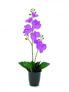 Orchidee - Lila - 0,57m