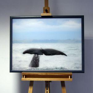 3D-Bild: Walfluke | Meer, Säugetier, Walgesänge