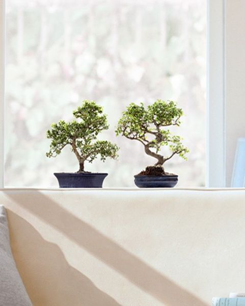 Fenstersticker Bonsai