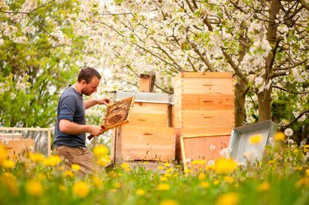 Aronia Honig - Echter Deutscher Bio Bienenhonig aus Thüringen 250g Cremig