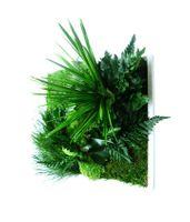 styleGREEN Pflanzenbild 35 x 35 cm 001