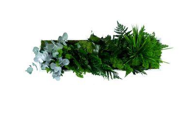 styleGREEN Pflanzenbild 70 x 20 cm