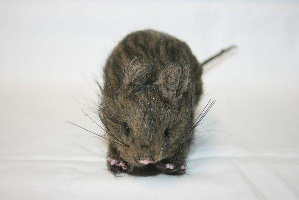 Ratte Braun – Bild 2
