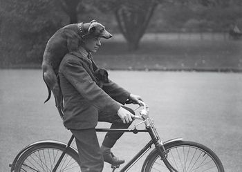 Postkarte A6 +++ LUSTIG +++ A MAN CYCLING WITH DOGS