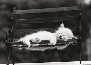 Postkarte A6 +++ LUSTIG +++ KITTEN SLEEPING ON A BENCH