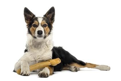 Wissen über Hunde