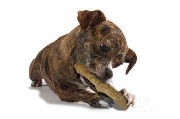 DOGWOOD Stick Petite  – Bild 3