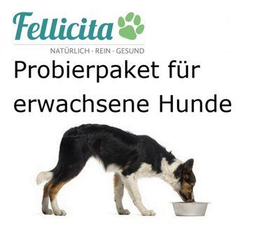 Willkommens-Paket für große Hunde zum Probierpreis – Bild 1