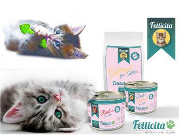 Willkommens-Paket für Kitten zum Probierpreis – Bild 1