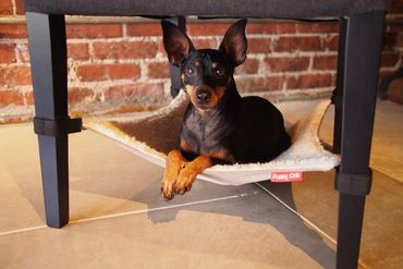Puppy Crib Black – Bild 1