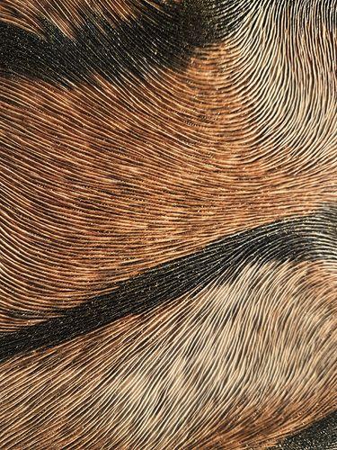 Exklusive Luxus Tapete Profhome 822603 Vinyltapete geprägt mit Tigerstreifen glänzend gelb ocker-gelb creme-weiß schwarz 5,33 m2 – Bild 2