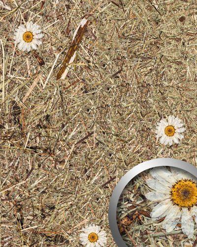 Wandverkleidung Natur Dekor WallFace AL-11004 ALPINE WHITE DAISY selbstklebende Tapete strukturiert mit echten unbehandelten alpinen Blumen und Gräsern matt braun weiß 4,026 m2 – Bild 1