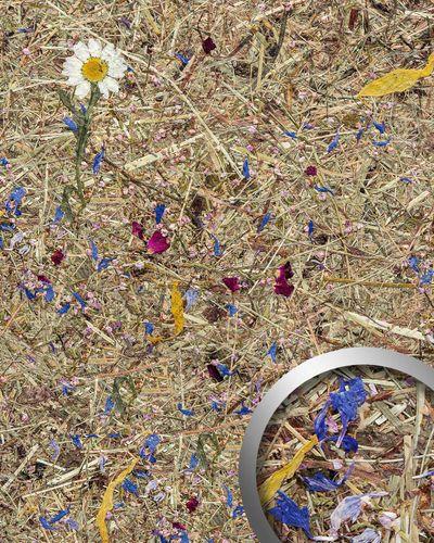 Revêtement mural décor naturel WallFace AL-11005 ALPINE POTPOURRI Panneau mural texturé avec des fleurs et des herbes alpines naturelles crues mate autoadhesivo brun blanc bleu rose 4,026 m2