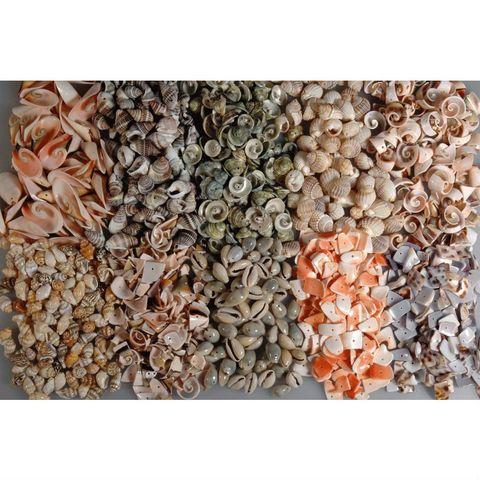 Deko Muscheln und Schneckenhäuser, 1 kg - Muschelmix 10 Sorten à 100 gr – Bild 1