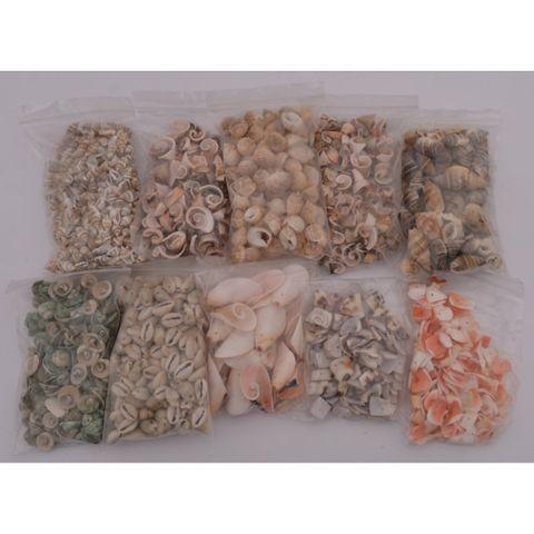 Muscheln gebohrt - großes 1kg Sortiment zum Basteln, 10 Sorten à 100g – Bild 2