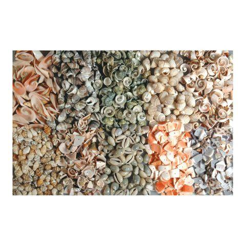 Muscheln gebohrt - großes 1kg Sortiment zum Basteln, 10 Sorten à 100g – Bild 1