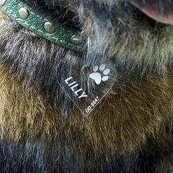 Plexiglas® Hundemarken individuell graviert Acrylglas Anhänger Namensschilder – Bild 13
