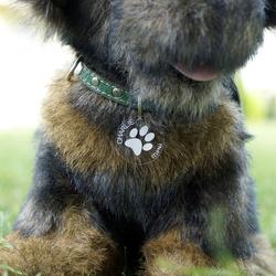 Plexiglas® Hundemarken individuell graviert Acrylglas Anhänger Namensschilder – Bild 2