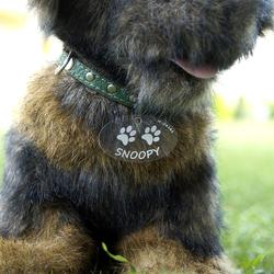 Plexiglas® Hundemarken individuell graviert Acrylglas Anhänger Namensschilder – Bild 4