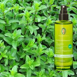Primavera Vegane Bio Pflanzenwässer Pflegewässer 100% naturreine ätherische Öle – Bild 9