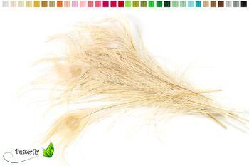 10 echte Pfauenfedern ca. 25-30cm  – Bild 5