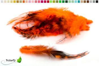20 Hahnenfedern CHINCHILLA ca. 8-13cm – Bild 4