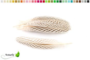 10 Fasanenfedern ZEBRA ca. 15-20cm