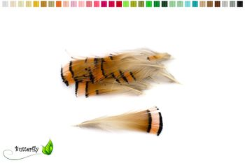 20 Goldfasan Federn ca. 4-8cm orange