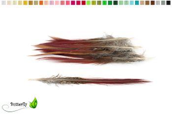 10 Fasanenfedern Sprössl ca. 10-15cm