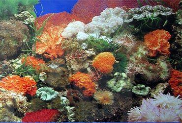 Rückwand Foto Folie Koralle / Pflanzen u. Wurzel 100x60 cm  – Bild 1