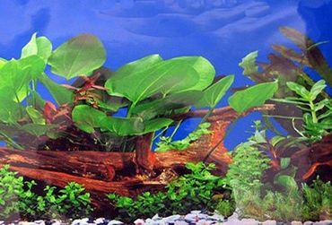 Rückwand Foto Folie Koralle / Pflanzen u. Wurzel 120x60 cm  – Bild 1