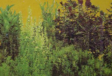 Rückwand Foto Folie Baumstamm / Pflanze m. Wurzel 200x50 cm – Bild 1