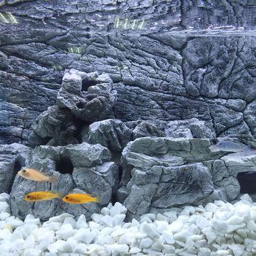 3d Aquarium Rückwand 130x60 cm SD-Line grey zweiteilig FIF – Bild 3