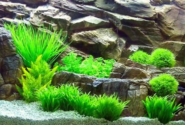 Aquarium Kunstpflanze Mini Dekoration 8-14 cm Nr. 201 – Bild 2