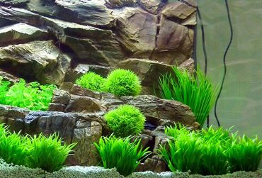 Aquarium Kunstpflanze Mini Dekoration 8-14 cm Nr. 203 – Bild 2