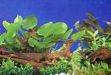 Rückwand Foto Folie Pflanzen  / Pflanzen m. Wurzel 100x40 cm – Bild 1