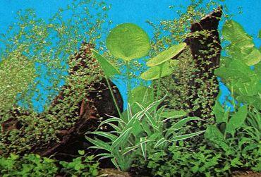 Rückwand Foto Folie Pflanzen  / Pflanzen m. Wurzel 100x40 cm – Bild 2