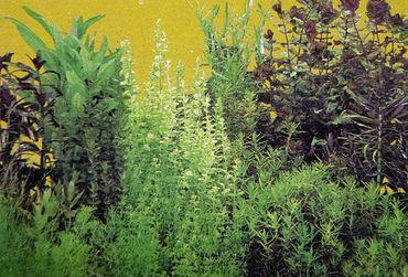 Rückwand Foto Folie Pflanzen / Pflanzen 50x30 cm – Bild 1