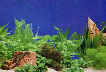 Rückwand Foto Folie Pflanzen / Pflanzen 60x30 cm – Bild 1