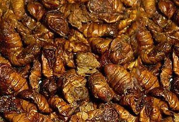 Seidenraupen Jumbo 400 ml Koi Leckerli