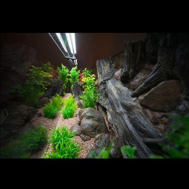 3d Aquarium Rückwand 250x60 cm Luxus-Line 3-teilig – Bild 4