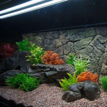 3d Aquarium Rückwand 87x60 cm SD-Line Terrarium FIF – Bild 3