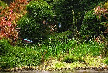 FIF50 Wasserpflanzen im Mix Aquarium Pflanzen Set GRATIS Düngekugeln