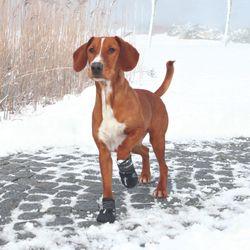 Trixie, Pfotenschutz Walker Active, M–L, 2 St., schwarz – Bild 2