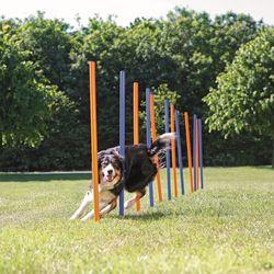 Trixie, Dog Activity Agility Slalom, Kunststoff, 115 × ø 3 cm, 12 St., blau/orange – Bild 2