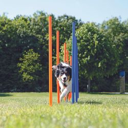 Trixie, Dog Activity Agility Slalom, Kunststoff, 115 × ø 3 cm, 12 St., blau/orange – Bild 1