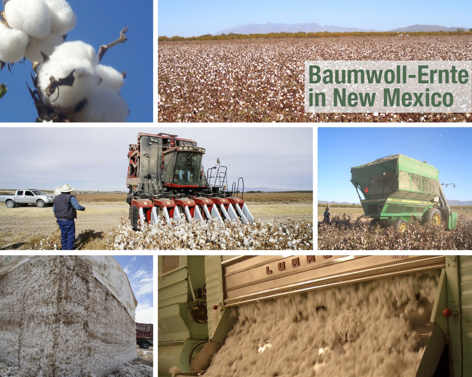 Baumwolle_Ernte