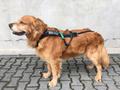 Non-Stop Freemotion Hundegeschirr verstellbares Zuggeschirr für Zughundesport Dogscooting, Bikejöring, Skijöring, Canicross, Dogtrekking, Schlitten und Trainingswagen
